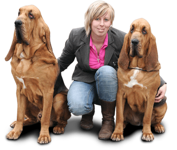 bloodhound breeder