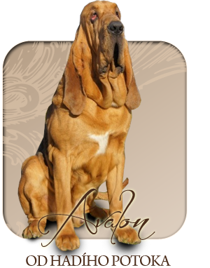 Our bloodhounds in memoriam
